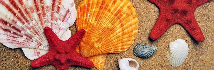Palinuro - Soggiorno mare 2020